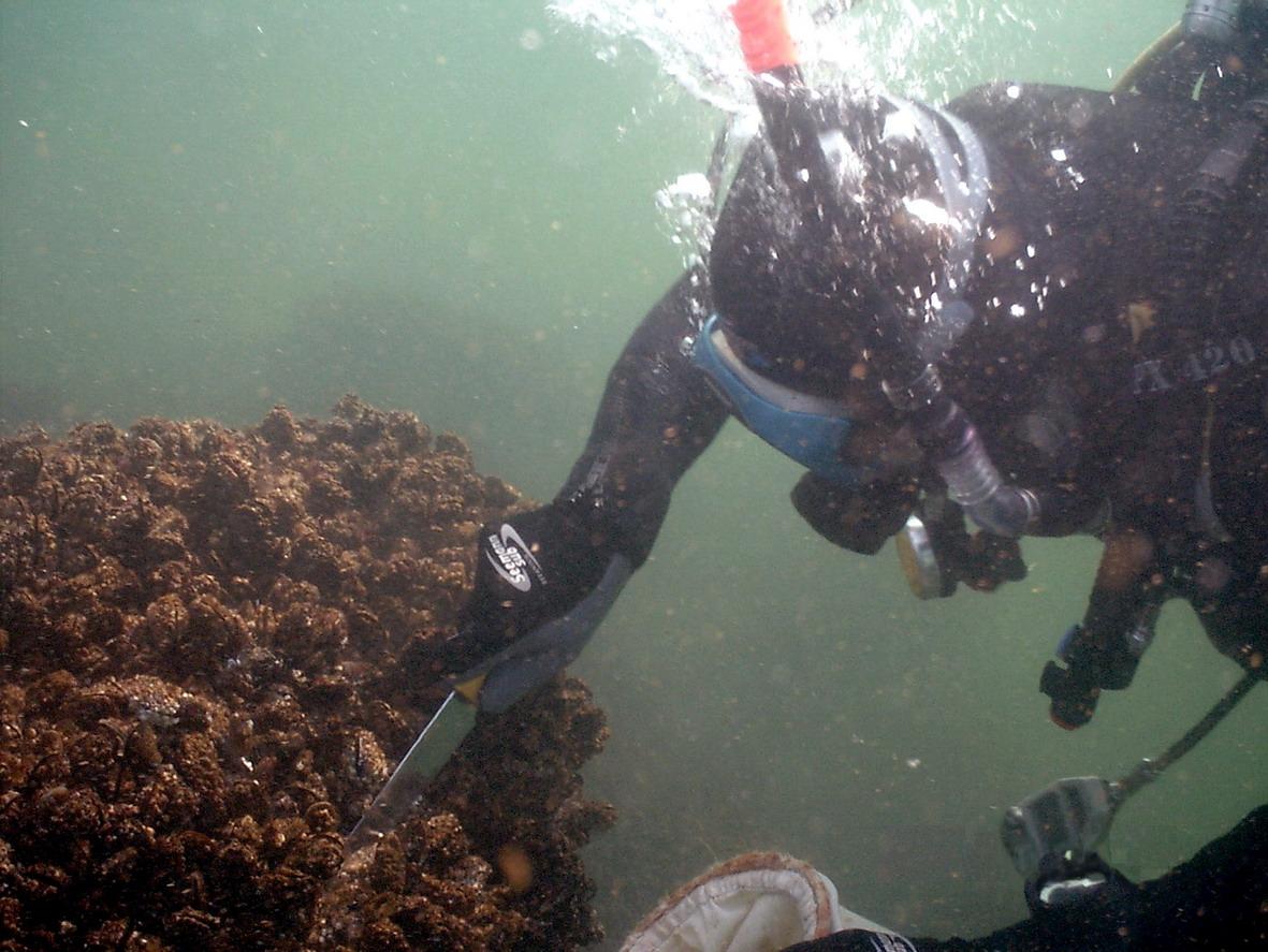 Biologii GeoEcoMar investighează ecosistemele marine