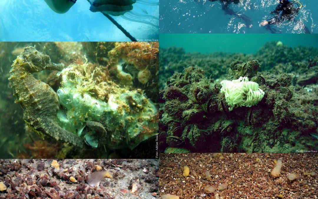 Colectiv Biologie-Ecologie
