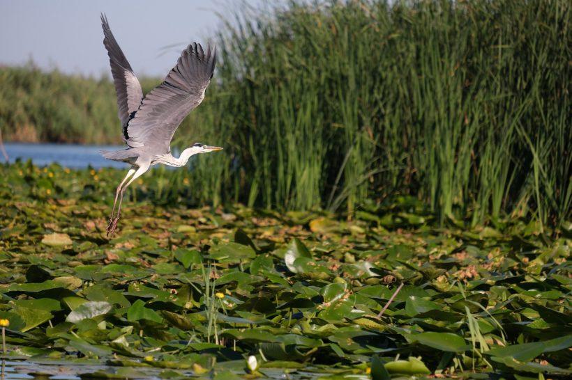 Edupedu.ro: Studiu GeoEcoMar în Delta Dunării – Evaluarea stării actuale a ecosistemelor acvatice deltaico-lagunare
